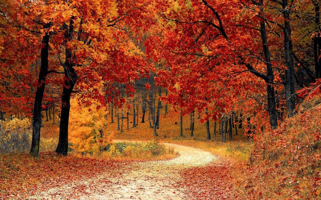 Gli alberi ringraziano